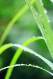 De dauwdalingen van het water Royalty-vrije Stock Afbeelding