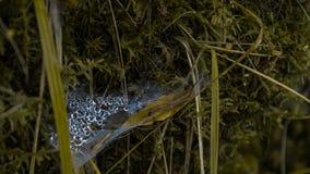 De dauwdalingen van ochtend bedauwen boshout Stock Fotografie