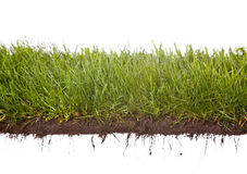 De dauwdruppels van het gras Stock Fotografie