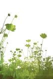 De de abstracte texturen en achtergronden van de bloem Royalty-vrije Stock Foto's