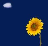 De de blauwe hemel en wolk van de zonnebloem Royalty-vrije Stock Foto's