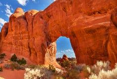 De de Boogduivels van de pijnboomboom tuinieren Bogen Nationaal Park Moab Utah Royalty-vrije Stock Foto's