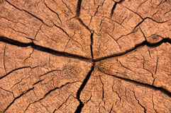 De de bruine textuur of achtergrond van de boomboomstam Royalty-vrije Stock Foto