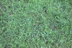 De de groene Textuur en achtergrond van het Grasgebied Royalty-vrije Stock Foto's