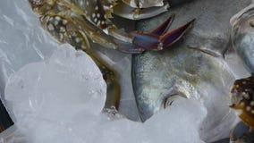De de heerlijke vissen & krab van Onheilsprofeetbramen, binnen wijzerplaatplaat bevroren visserijijs stock videobeelden