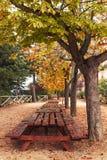 De de herfstbladeren Stock Foto's