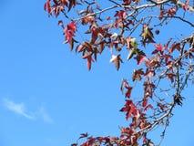 De de herfstbladeren treuzelen langer Stock Fotografie