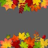 De de herfstesdoorn verlaat kader op donkere achtergrond Stock Afbeelding