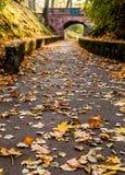 De de herfstweg leidt tot de brug Stock Foto