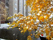 De de herfstwinter op de straten Stock Afbeeldingen