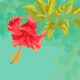 De bloem van de hibiscus op gestemde achtergrond Stock Afbeelding