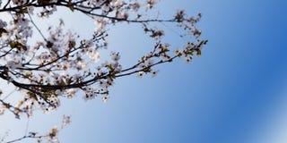 De de lenteachtergrond Royalty-vrije Stock Foto's