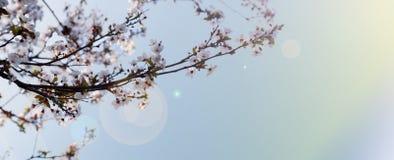 De de lenteachtergrond Stock Afbeeldingen