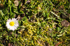 De de lentebloemen beginnen te bloeien Royalty-vrije Stock Foto
