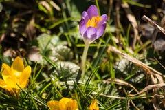 De de lentebloemen beginnen te bloeien Royalty-vrije Stock Afbeelding