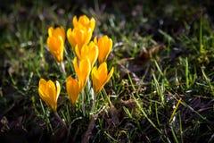 De de lentetijd… nam bladeren, natuurlijke achtergrond toe Royalty-vrije Stock Foto