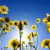 De de lentetijd… nam bladeren, natuurlijke achtergrond toe Stock Foto