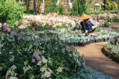 De de mensenwerken van de onduidelijk beeldtuinman op het tuingebied Royalty-vrije Stock Foto