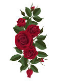 De de rode knoppen en bladeren van rozenbloemen Stock Afbeeldingen
