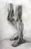 De de studiowerken van de anatomie Muscles.Drawing Stock Afbeeldingen