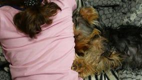De de terriërslaap van hondyorkshire op het bed naast een huisdier is meisje stock videobeelden