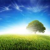 De de verse Weide en Boom van het Gras stock afbeeldingen