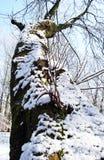 De de winterBoomstam Royalty-vrije Stock Fotografie