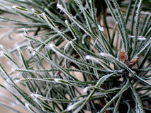 De de winterorde ⦠royalty-vrije stock fotografie