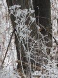 De de wintersneeuw en de rijp behandelde installaties zijn aardart. Stock Afbeelding