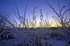 De de winterzonsondergang. Stock Afbeeldingen