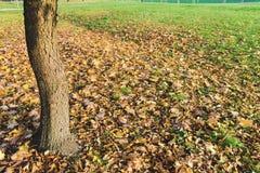 De de zomerherfst, passage en stroom van de seizoenverandering van tijdconcept Royalty-vrije Stock Fotografie