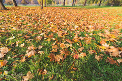 De de zomerherfst, passage en stroom van de seizoenverandering van tijdconcept Royalty-vrije Stock Afbeeldingen