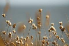 De de zomerkust van de Oekraïne met wildflowers dichtbij Mykolaiv de achtergrond van het aardbehang Stock Foto's
