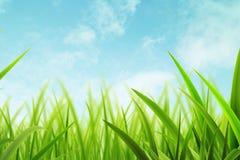 De de zomerlente/Groen Stock Foto