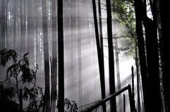 De de zonstralen van de winter gieten door bomen in mistige fores royalty-vrije stock afbeelding