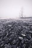 De de zwart-wit vorst en mist van de winter - Stock Fotografie