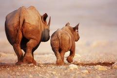De de zwarte baby en koe van de Rinoceros Stock Foto