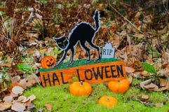 De de zwarte kat en pompoenen van Halloween decoratopn Stock Afbeelding