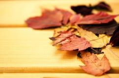 De decoratie van de de herfsttijd, droge esdoorn gaat pinnedrope met wasknijper, houten achtergrond weg Stock Foto