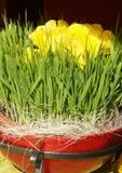 De decoratie van de gele narcis Stock Foto