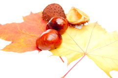 De decoratie van de herfst Stock Foto's