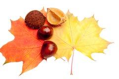 De decoratie van de herfst Stock Foto