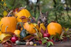 De decoratie van de herfst Granaatappel, druiven en kastanje op hout in oktober Stock Foto