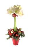 De decoratie van de Kerstmislijst van de amaryllis Stock Afbeeldingen