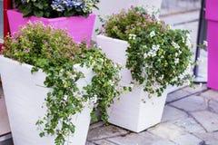 De decoratie van de straatbloem in Sanremo, Italië Stock Foto
