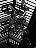 De Decoratie van neonkerstmis Royalty-vrije Stock Foto
