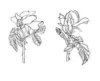 De decoratieve inkttekening nam bloem met bladeren toe Stock Foto's