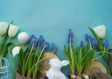 De decoratieve samenstelling van Pasen op een blauwe achtergrond Wit konijn, tulpen, bloempotten, unpainted eieren en een boom Stock Afbeeldingen