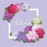 De decoratieve uitstekende hydrangea hortensia bloeit met bladeren in vierkant vormkader op purpere achtergrond Stock Foto's