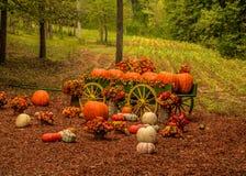 De decoratieve vertoning van het pompoenlandbouwbedrijf in de herfst stock foto's